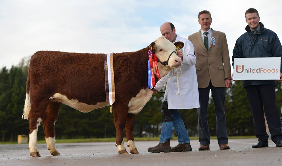 Pedigree Polled Herefords